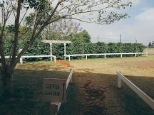 Coffee Farm-3