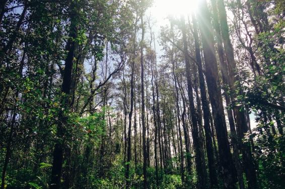 Lava Trail-4